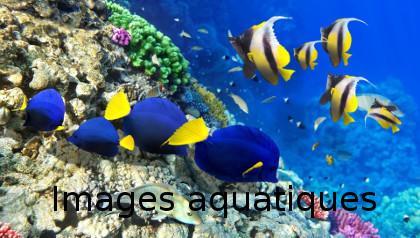 images aqua